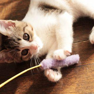 ブラッシングや爪切りなど!猫のお手入れの方法・やり方3選