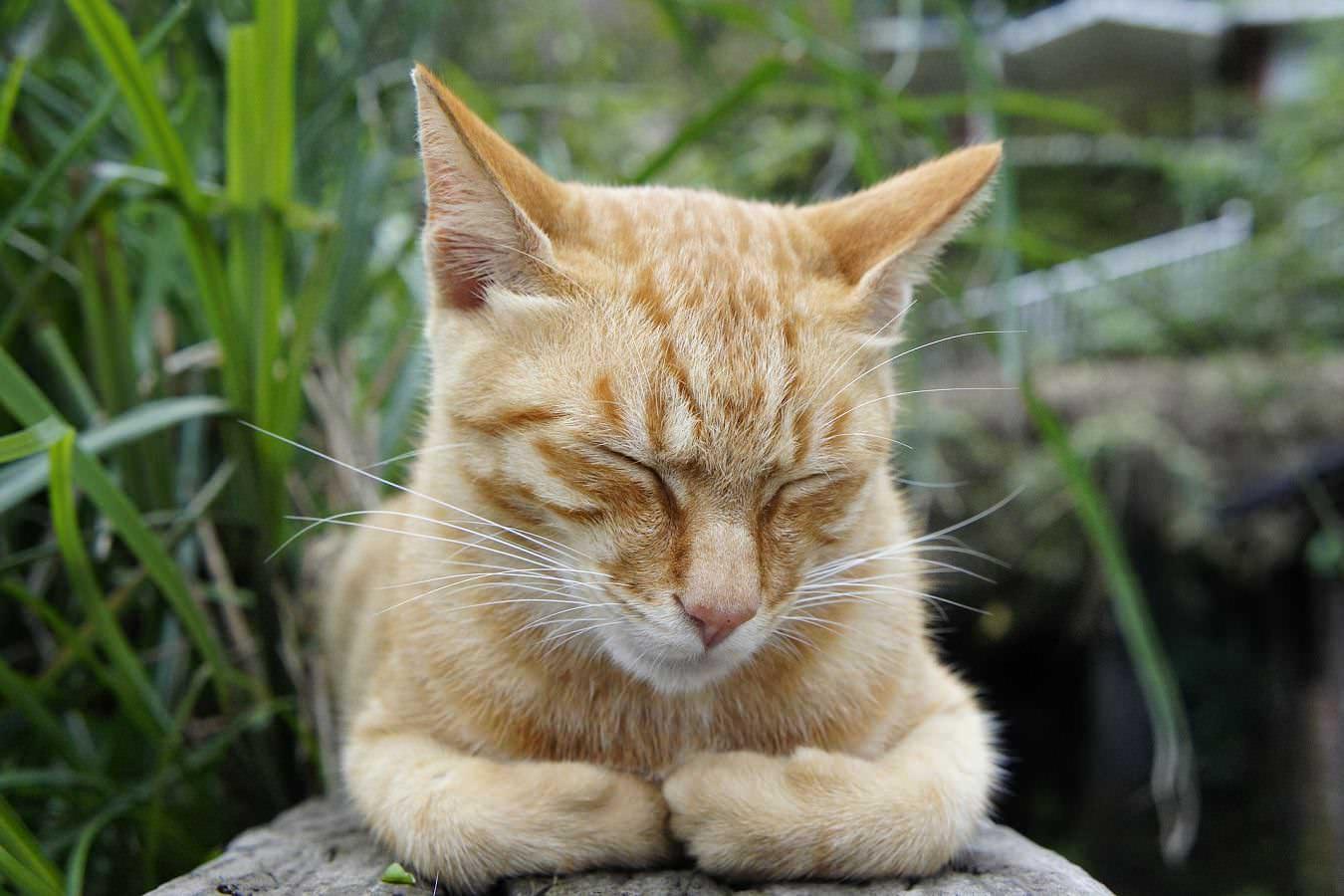 泣く・寝すぎが原因!寝起きのまぶたの腫れを治すための解消法5選