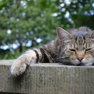ドライアイの原因!目を開けたまま寝るのを防ぐ対策方法や治し方3選